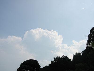 2006813.jpg