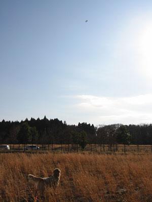 2007-114a.jpg