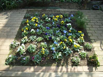 冬~春 植えてすぐ  花壇