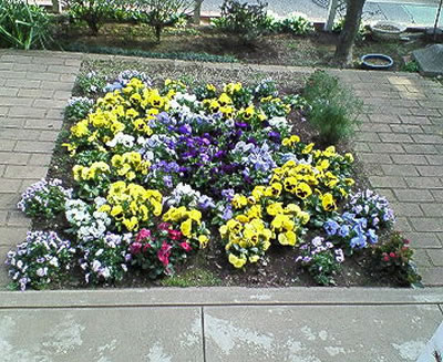 冬~春3月  花壇