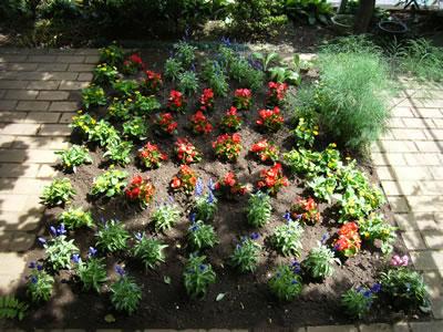 夏から秋バージョン 花壇