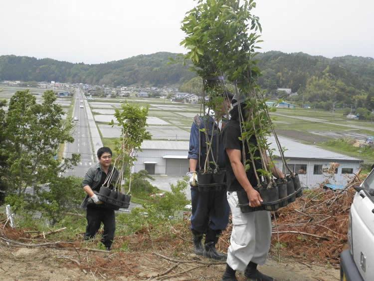 山頂へ桜の苗木を運び上げる