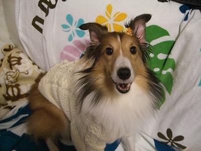 かわいいセーター おリボンまで