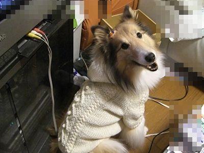 かわいいセーター かわいいわ~~