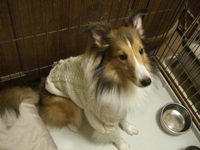 かわいいセーター おかわり