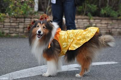 2009.10.25 秋のオフ会後ミントくんのお店へ 可愛いミンちゃん