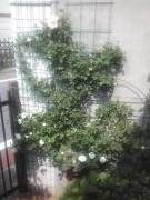 aruberuzen112.jpg