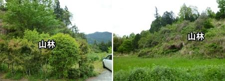 美里町山林写真