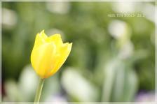 20_MG_0418-2012.jpg