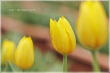 21_MG_0337-2012.jpg