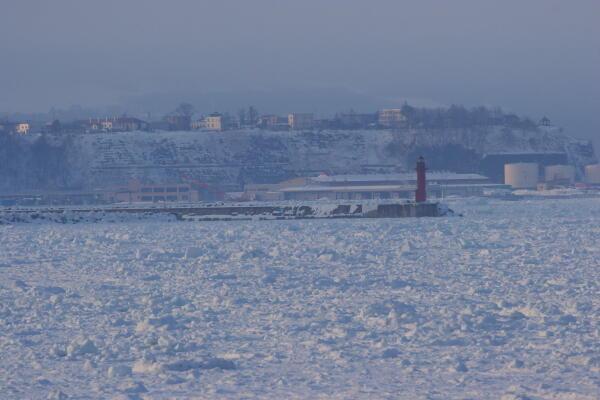 流氷に覆われた海