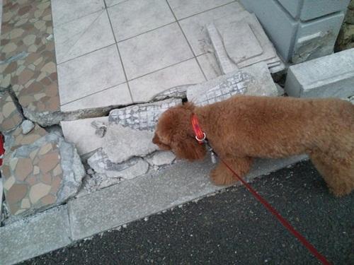 3.11地震・12
