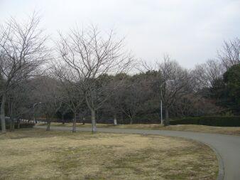 080301_shikinomori07.jpg