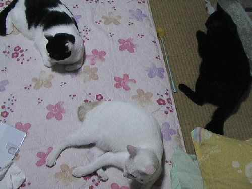 fukuhanifuki104.jpg