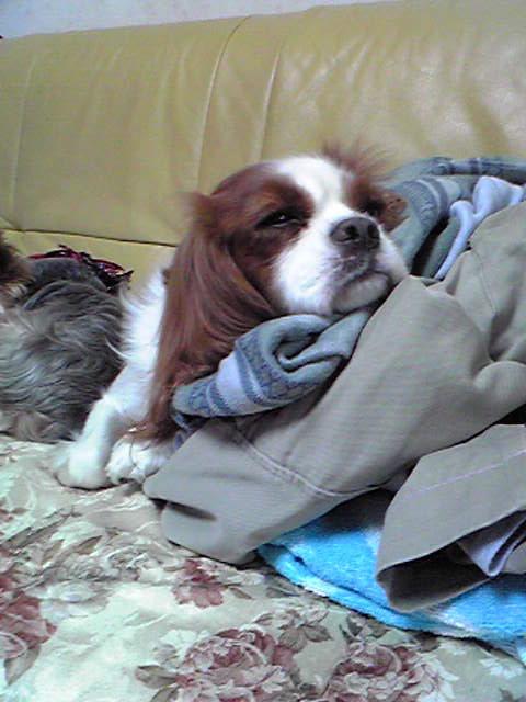 高過ぎる枕1