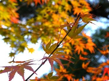 photosh2.jpg
