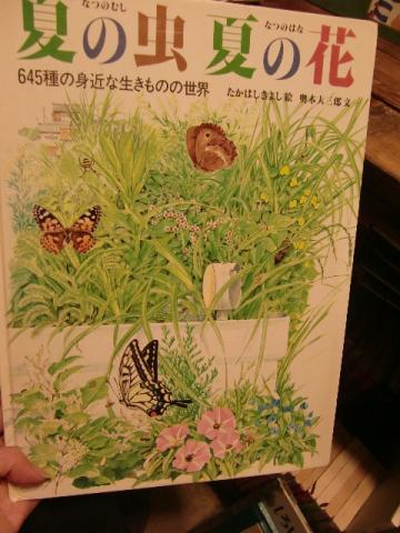 9月2日夏の虫夏の花