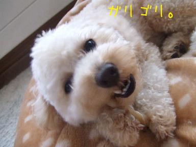 20071119215910.jpg