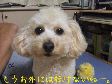 20071119215932.jpg