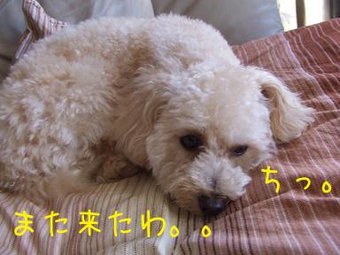 20071130210221.jpg