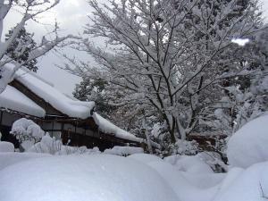 綺麗な雪景色なのや