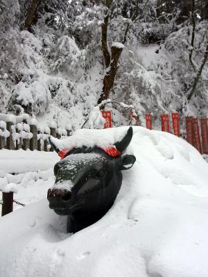 雪の中の神牛さん