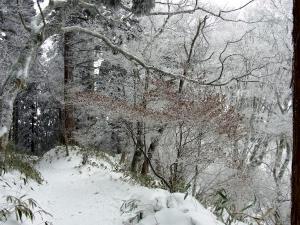 雪の登山道(ちょっとマイナーコース)