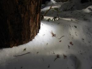 雪のキラキラ