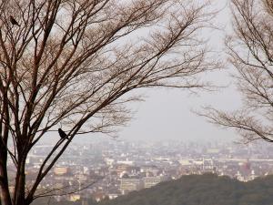 霊園からの今日の景色