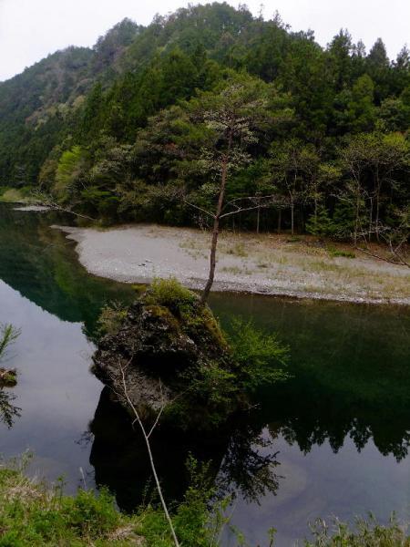 川中の一本松