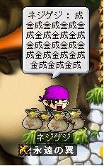 Maple00640.jpg