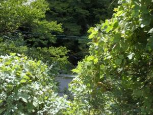 専用道から見える渓流