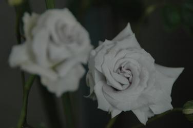 201105172.jpg