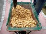 砂利を固めるボンド(じゃりっ固くん)を混ぜる
