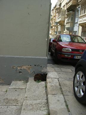 malta_cat.jpg