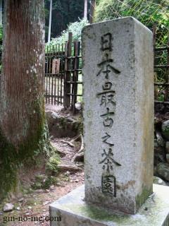 日本最古の茶園