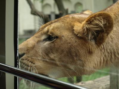 多摩動物公園 076