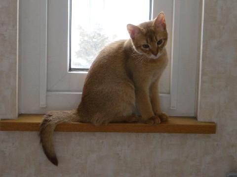 窓辺のジョゼフィン(2008.01.04)