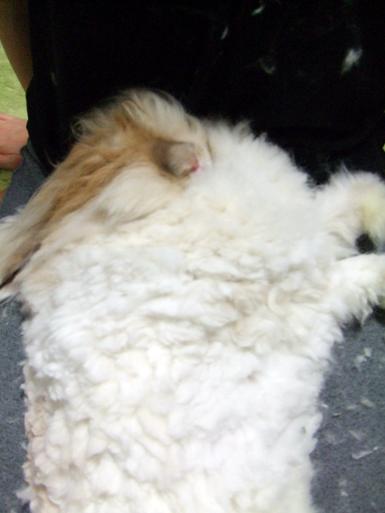 毛刈りb3