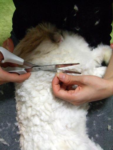 毛刈りb2
