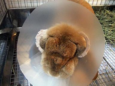 手術後の米子2