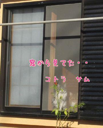 a9sfAgJh.jpg
