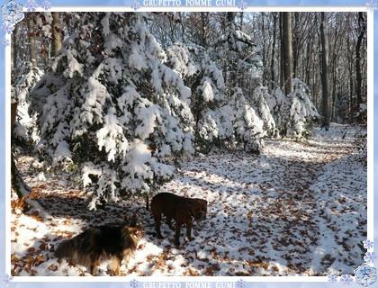 落葉より先に雪