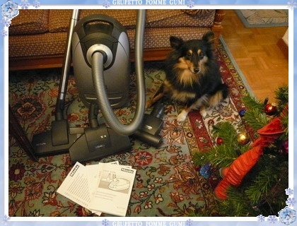 Miele Cat & Dog