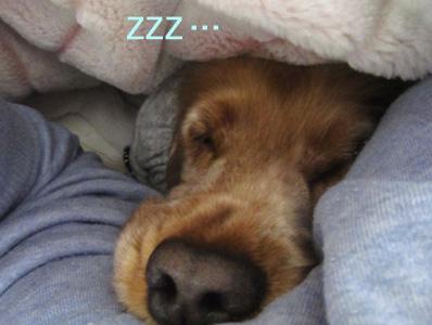 Pさん熟睡