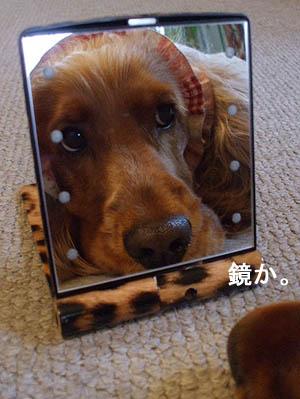 な~んだ鏡か。