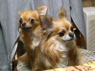 2009_1010chiwa0149b.jpg