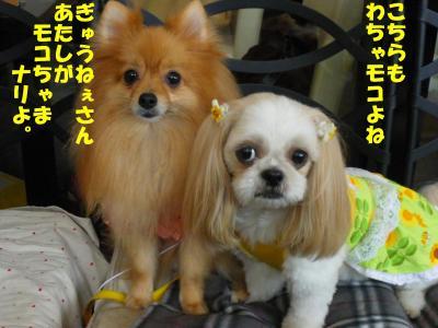 IMGP0738-・祇convert_20091002085353