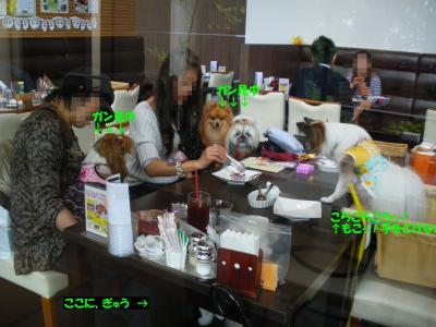 IMGP0684-・祇convert_20091004164407