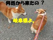 コギちゃんと1